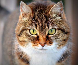 Características En Común Entre Gatos Y Perros Plumas Y